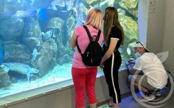 Реабилитация в Крыму и Севастопольский аквариум
