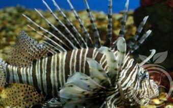 севастопольский аквариум