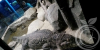 Севастопольский аквариум и лечение наркомании в Крыму